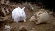 Dread Rabbit of Caerbannog