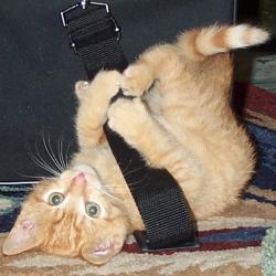 Cute cat falling over