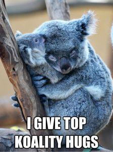 Koala labeled 'I give top koality hugs'