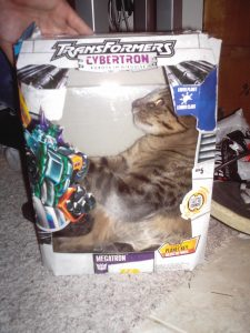 Cat in a Transformers toy box