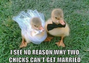 Two baby birds, captioned: I see no reason why two chicks can't get married